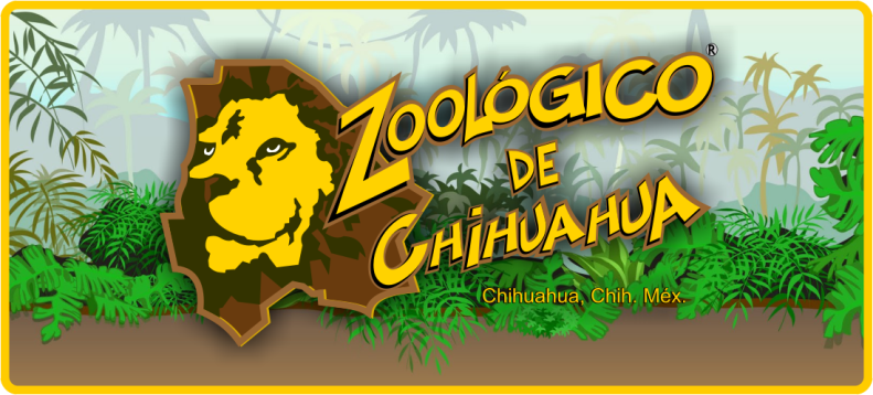 zoologico related keywords zoologico keywords